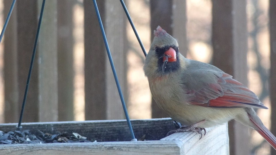 February is for the Birds: National Bird Feeding Month