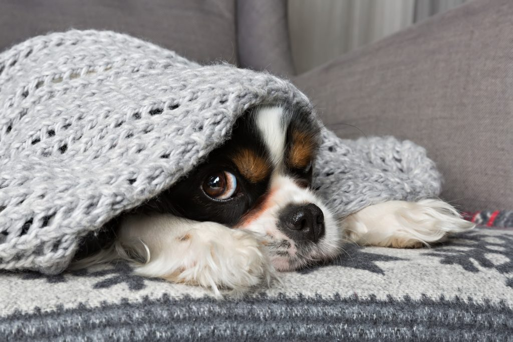 5 chilling tales to cozy up with