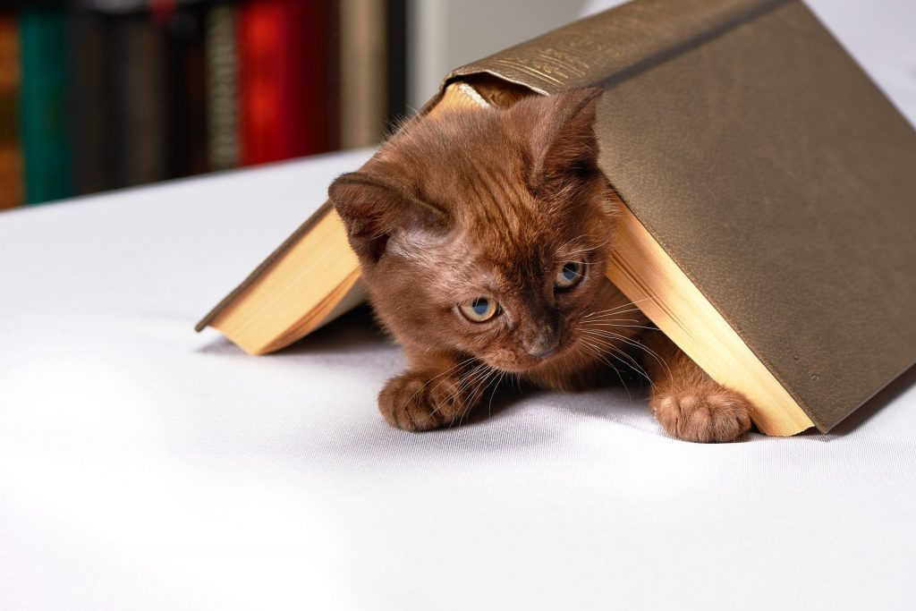 Click on the picture of a cute kitten hiding under a book to head to this week's game!