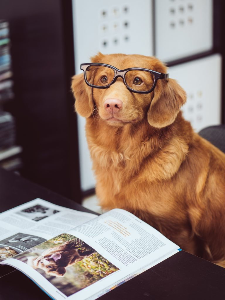 Click on the picture of a dog in glasses reading to go to this week's game.