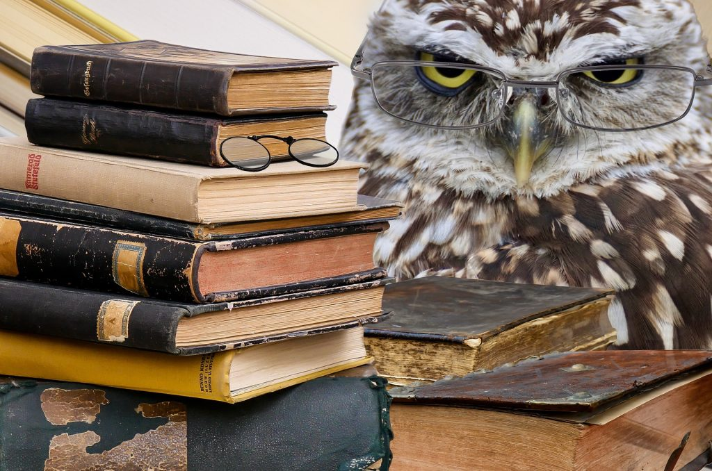 Click on the picture of this scholarly owl to play this week's game!