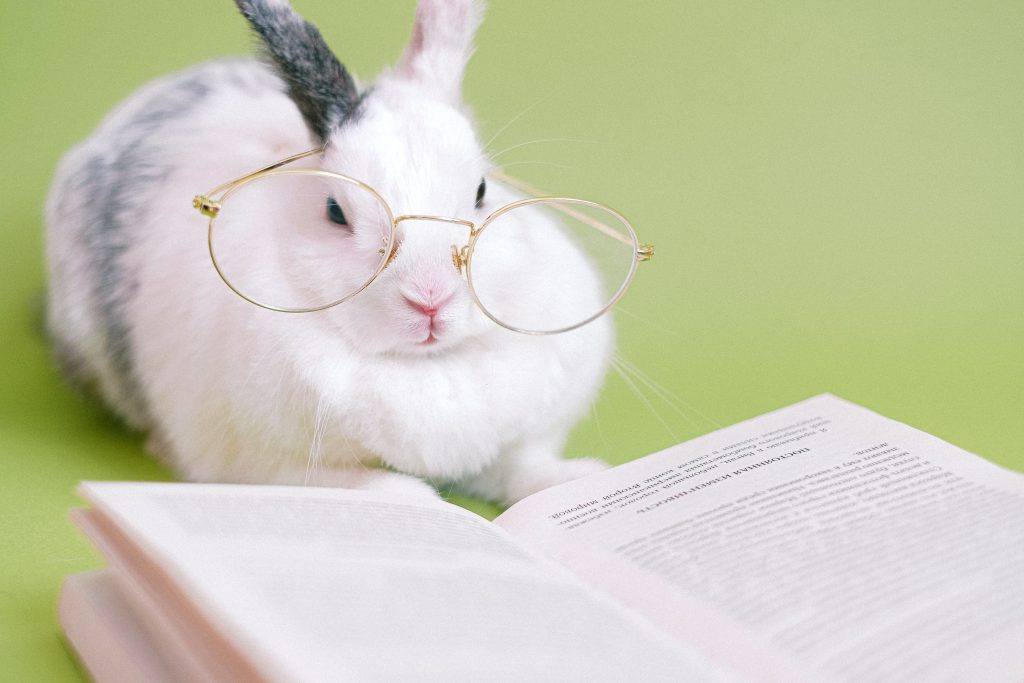 Click on the picture of a bunny reading to head to this week's game!
