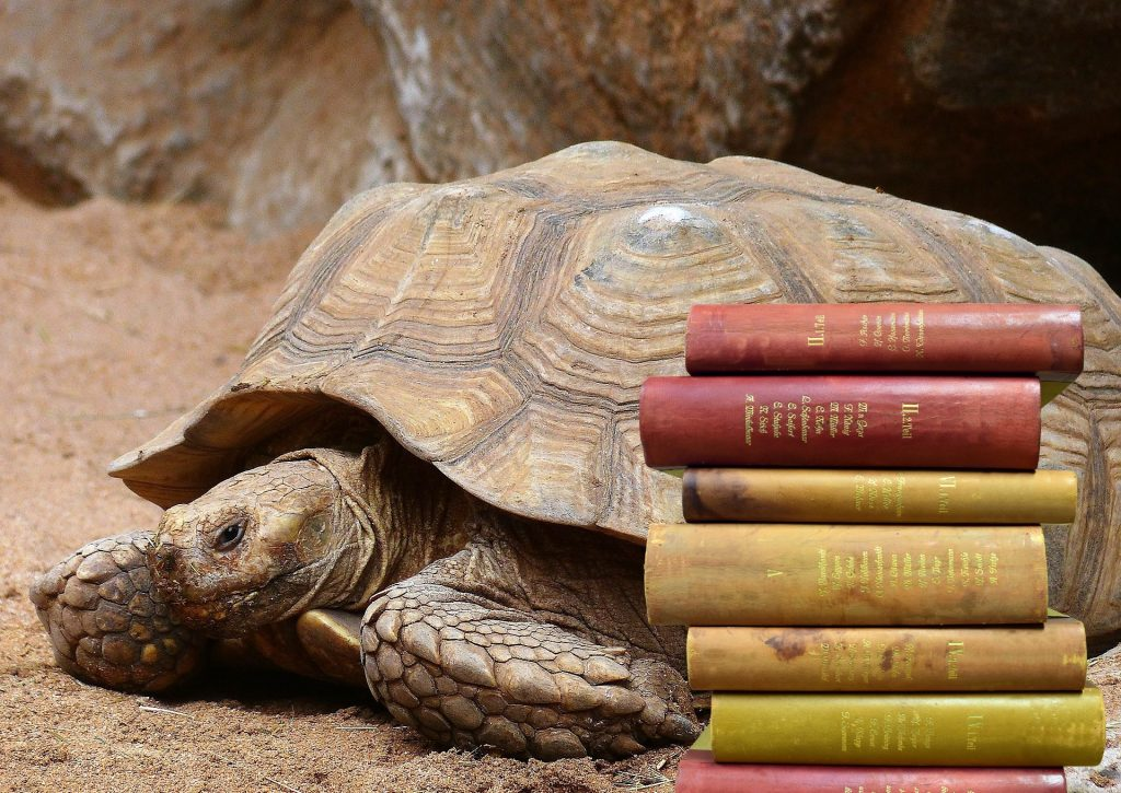 Click on the picture of this large tortoise to play this week's game.
