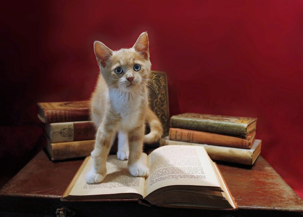 Click on the kitten standing on a book to play the last game.