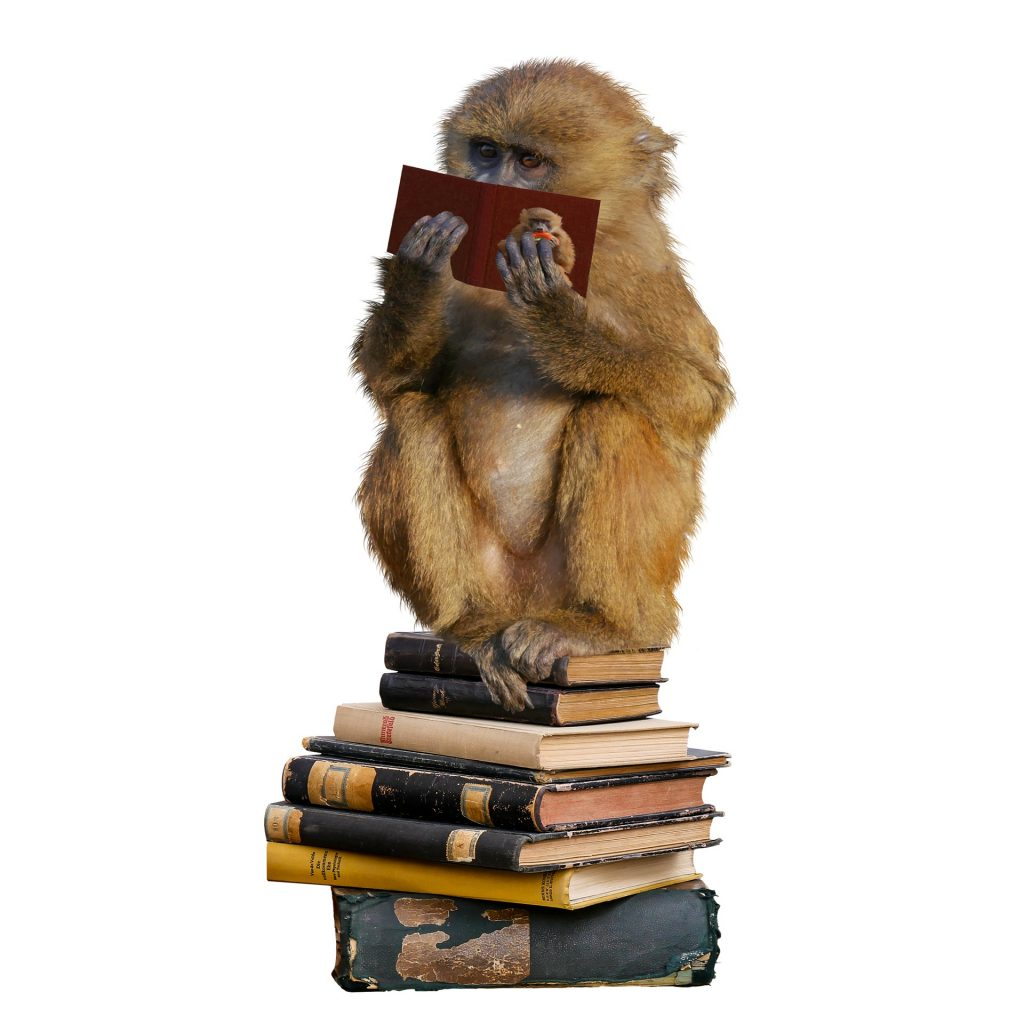 Click on the monkey reading a book to go to the game.